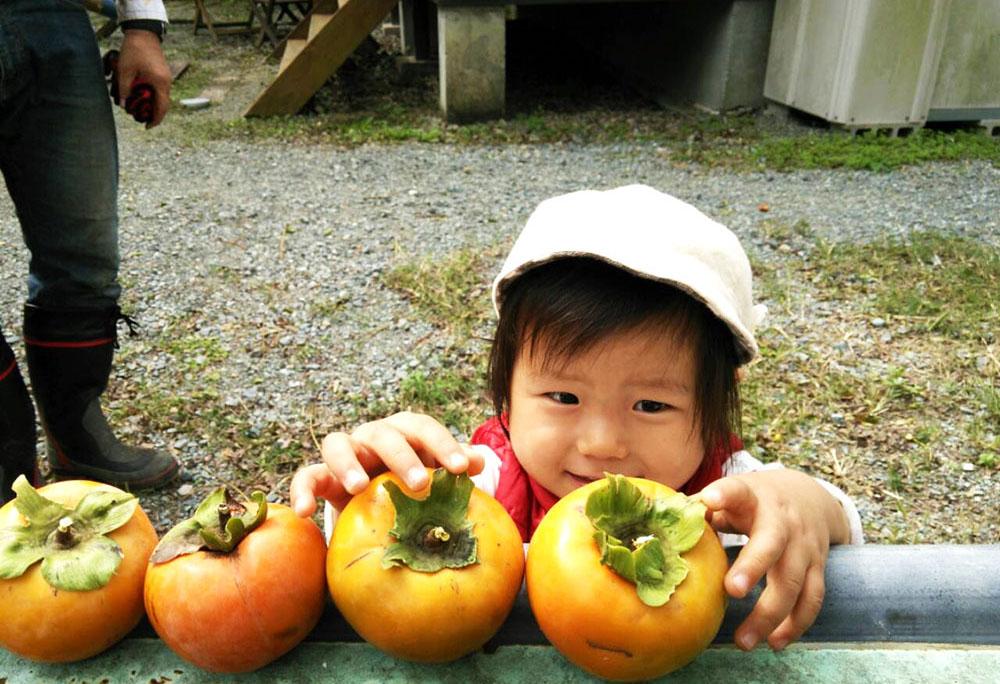 幼児の健康おやつ素材柿を狙う娘